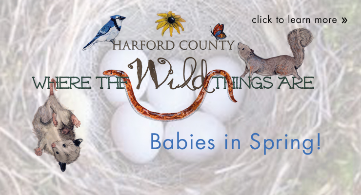 Where the Wild Things Are - Babies in Spring
