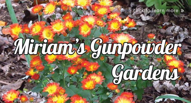 Miriam's Gunpowder Gardens